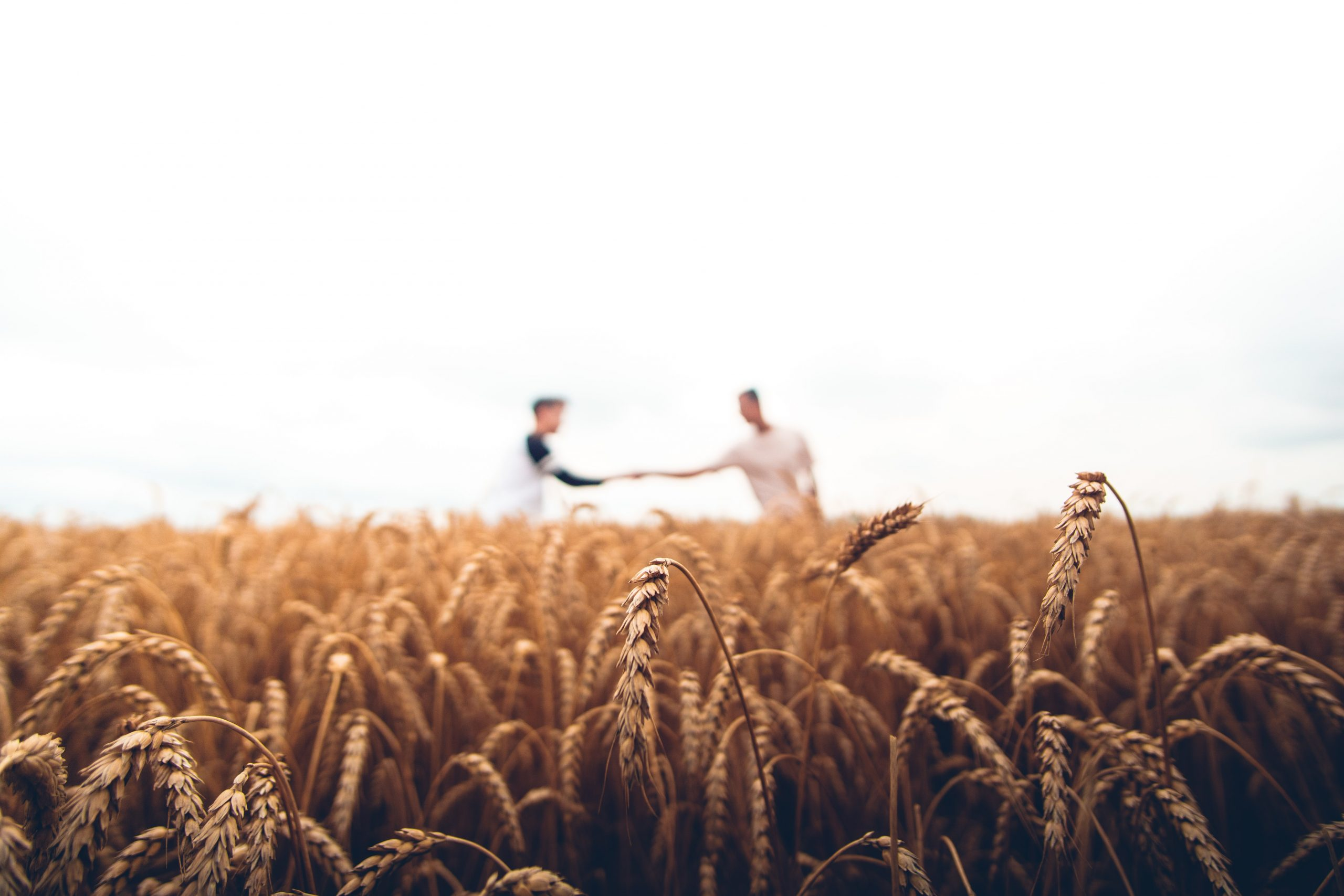It's Harvest Time – Tips On Selling Your Franchised Business